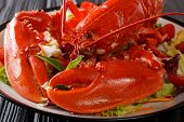 Whole Cooked Lobster Served With Vegetable Salad Close-up. Horizontal poster