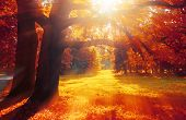 Autumn Trees In Sunny October Park Lit By Evening Sunshine. Colorful Autumn Landscape With Sunbeams  poster