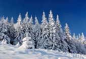 picture of winter landscape  - Winter landscape with snow in mountains Carpathians - JPG