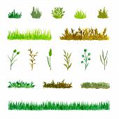 Set Of Various Plant Elements (grass, Bushes, Stems), Watercolor Hand Drawn And Painted, Isolated On poster