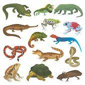 Vector Reptile Nature Lizard Animal Wildlife Wild Chameleon, Snake, Turtle, Crocodile Illustration O poster