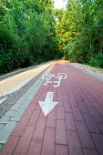 Bike Path Through The Forest. Bicycle Path Symbol poster