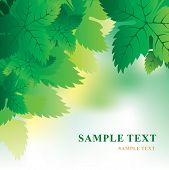 image of grape-vine  - Soft vector background with grape leaves - JPG