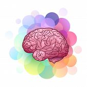 Cartoon Illustration Of Human Brain With Highlights And Shadows With Colorful Circles. Side View. Cr poster