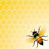 picture of honey-bee  - Bee on honeycomb - JPG