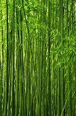 Постер, плакат: Бамбук текстуры
