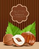 pic of hazelnut tree  - vector hazelnut kernels with the leaves on a brown - JPG