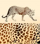 image of jungle animal  - Background from leopard - JPG
