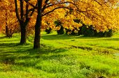 Fall Forest Landscape. Fall Trees With Yellowed Fall Foliage In Sunny October Fall Forest Lit By Sun poster