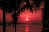 Постер, плакат: Красное небо закат с пальмами