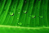 Постер, плакат: Зеленый лист с капли воды см также другие связанные изображения в моем портфолио