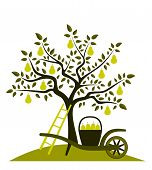 picture of hand-barrow  - vector pear tree and hand barrow with basket of pears - JPG