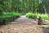 stock photo of split rail fence  - A trail of wood chips between two split rail fences leading into the forest - JPG
