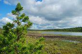 stock photo of boggy  - Boggy landscape - JPG