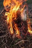 picture of inflamed  - body of flame inflaming in a forest - JPG