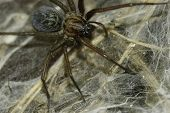 image of venomous animals  - spider patiently waiting for prey in its web - JPG
