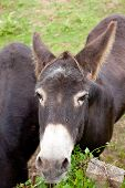 pic of headstrong  - View of two Donkeys grazing in the meadow - JPG