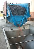 pic of hoppers  - Grape harvester truck rakes newly picked grapes to a hopper - JPG
