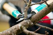 stock photo of tree trim  - Man with gloves is cutting branches from tree trimming - JPG