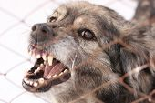 stock photo of growl  - Angry aggressive barking dog in a steel cage - JPG