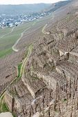 picture of moselle  -  vineyards on Moselle river - JPG