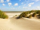 stock photo of dune grass  - Beach and dunes at Knokke - JPG