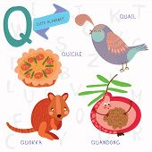 picture of quokka  - Alphabet design in a colorful style - JPG