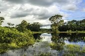 picture of wetland  - Wetlands in Pantanal - JPG