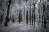 pic of shacks  - A walk through the deciduous maple woods and a visit to the maple syrup cabin shack - JPG