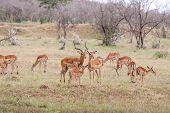 image of antelope horn  - antelopes on a background of green grass - JPG
