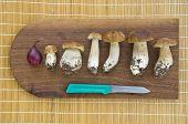 image of boletus edulis  - mushrooms cep boletus and knife on kitchen table - JPG