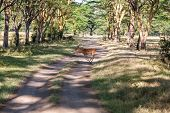 picture of antelope horn  - antelope on a background of road - JPG
