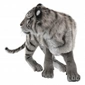 picture of white-tiger  - 3D digital render of a white tiger turning back and looking around isolated on white background - JPG