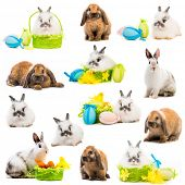 pic of dwarf rabbit  - photo collage rabbits Easter eggs in a basket on a white background - JPG