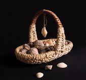 foto of shells  - Basket with sea shells on black background - JPG
