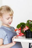 picture of schlumbergera  - portrait of little with Christmas cactus - JPG