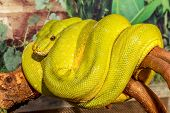 picture of green snake  - fantastic close - JPG