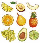 image of melon  - Vector illustration of lemon plum melon orange pear pineapple grapes avocados lime - JPG