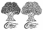 picture of olive trees  - vector pattern with an olive tree for packaging - JPG