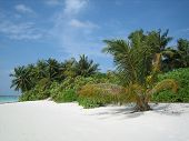 image of tropical island  - tropical island palm trees the beautiful blue sky a sandy beach - JPG