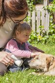 foto of baby dog  - brunette woman mother and blonde baby two years old age touching with hand and petting a brown terrier breed dog belly lying over green grass lawn - JPG