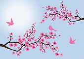 foto of cherry-blossom  - Vector cherry blossom with birds and blue sky with the sun background - JPG