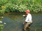 picture of mayfly  - Fisherman has hooked a brown trout on an English chalkstream.