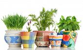 image of potted plants  - Five different herbs in colorful pots isolated on white - JPG