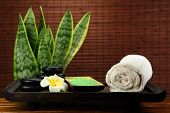 picture of sansevieria  - spa and body care treatment - JPG