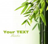 stock photo of bamboo leaves  - Bamboo background with copy space - JPG