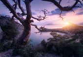 Amazing Old Tree In Crimean Mountains At Sunrise poster