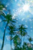 Abstract background image of defocused palm trees over sunny sky with sunbeam poster