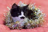 Handsome Black And White Cat Covered In Silver Tinsel - A Christmas Kitty poster