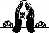 Animal Dog Basset Hound 8U8 (3) Peeking.eps poster